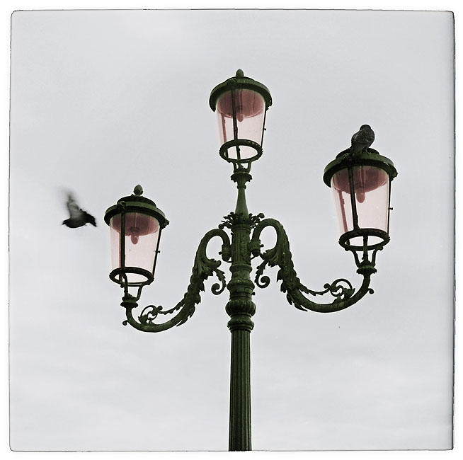 Lamps and pigeons