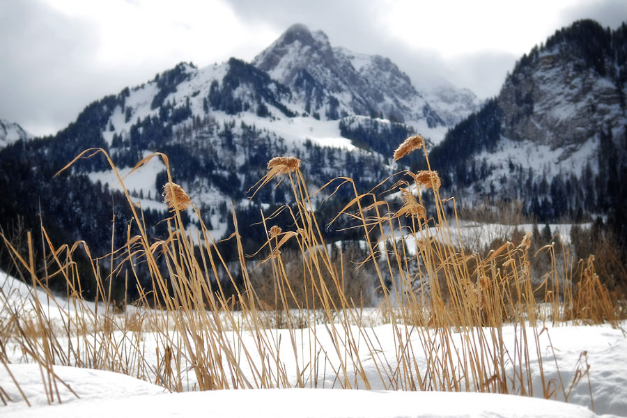 Reeds and mountains