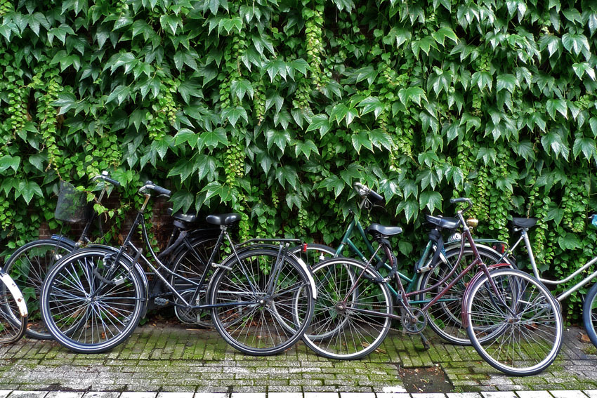 Bikes and leaves