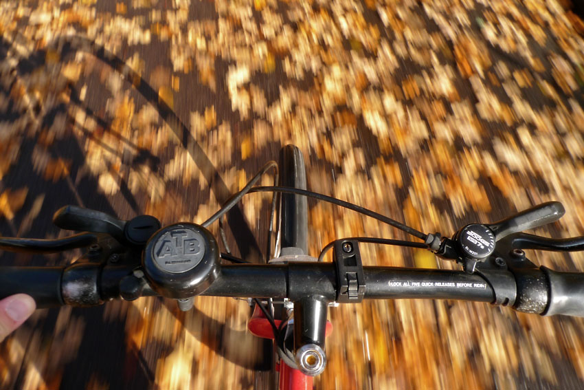 Autumn leaves from bike