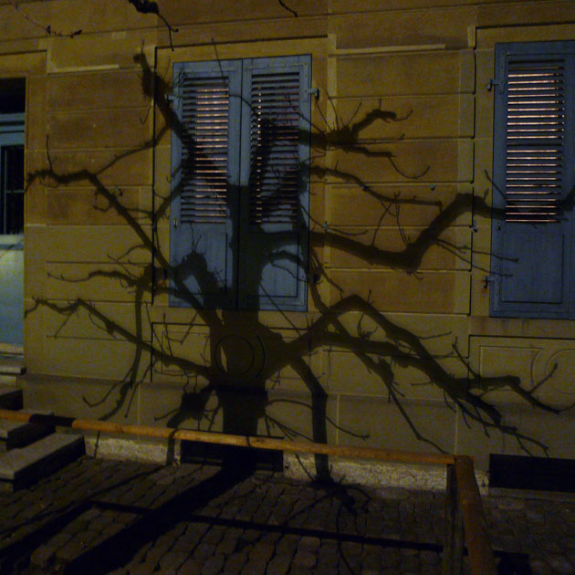 Tree at night