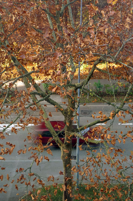Autumn leaves (with car)