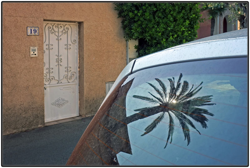 Palmtree and door