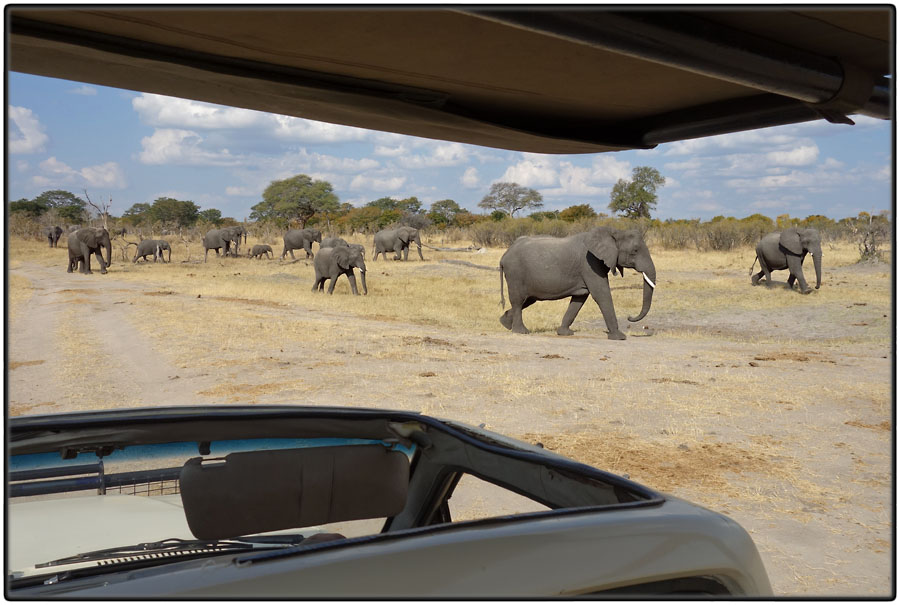 Elephants from car