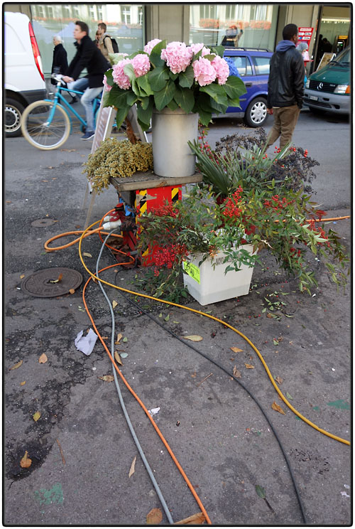 Flowers and electric cables
