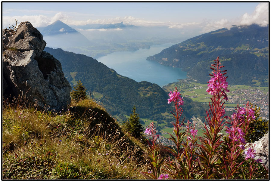 View of Lake Thun from Schynige Platte