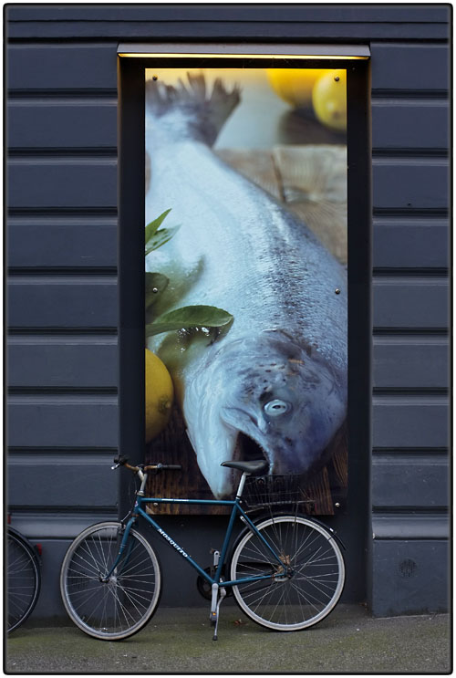 Fish and bike