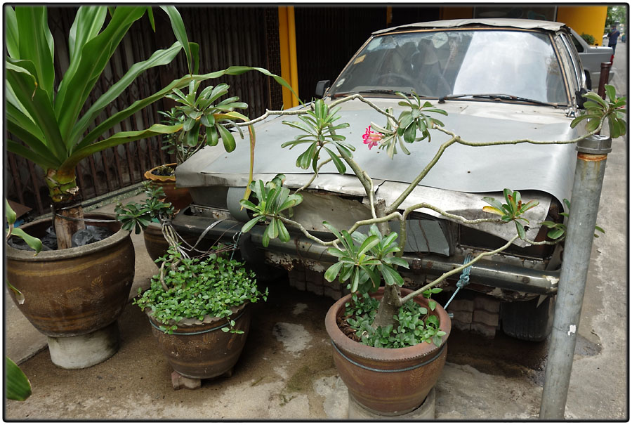 Wrecked car and potted plants