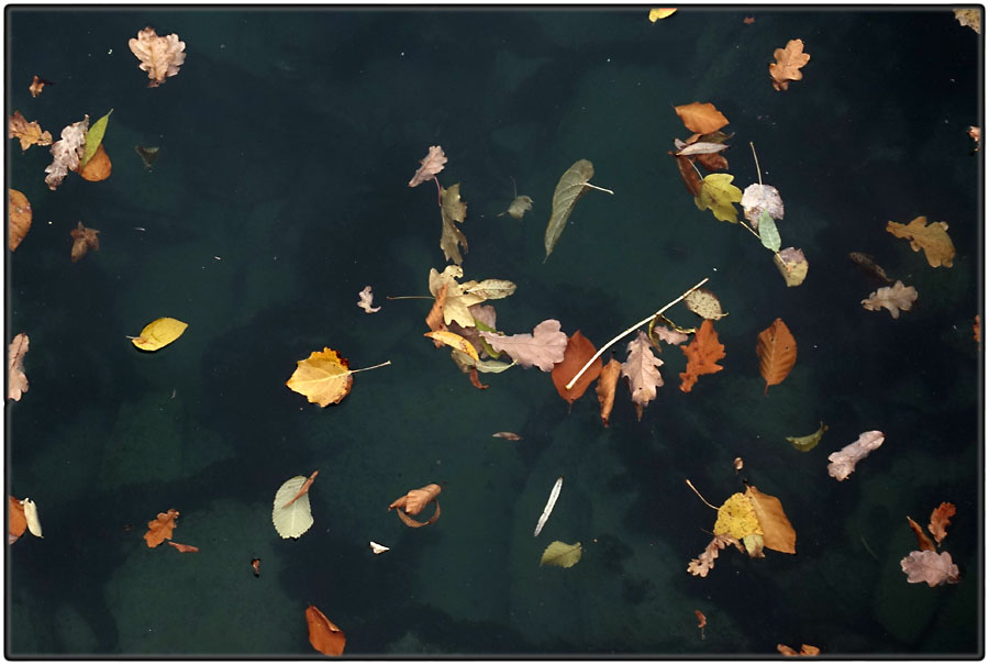 Autumn leaves #2