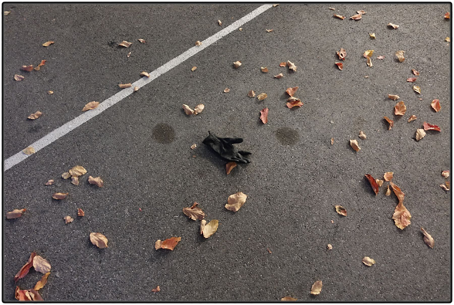 Autumn leaves and lost glove