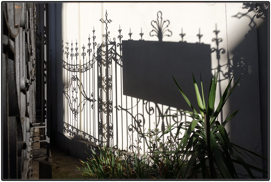 Shadow and plants