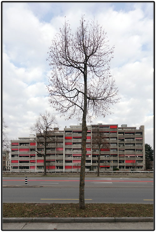 Trees and block of flats