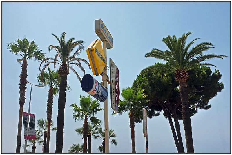 Palm trees and signposts