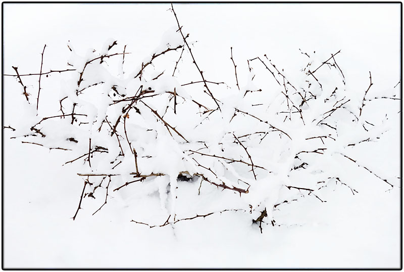 Snow twigs #2