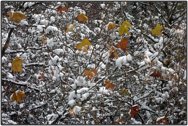 Autumn leaves and first snow