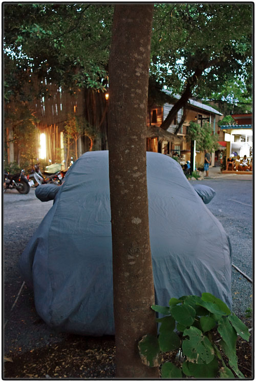 Wrapped car behind tree
